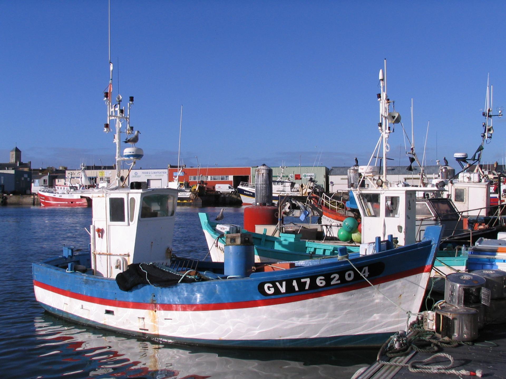 200110 requin b