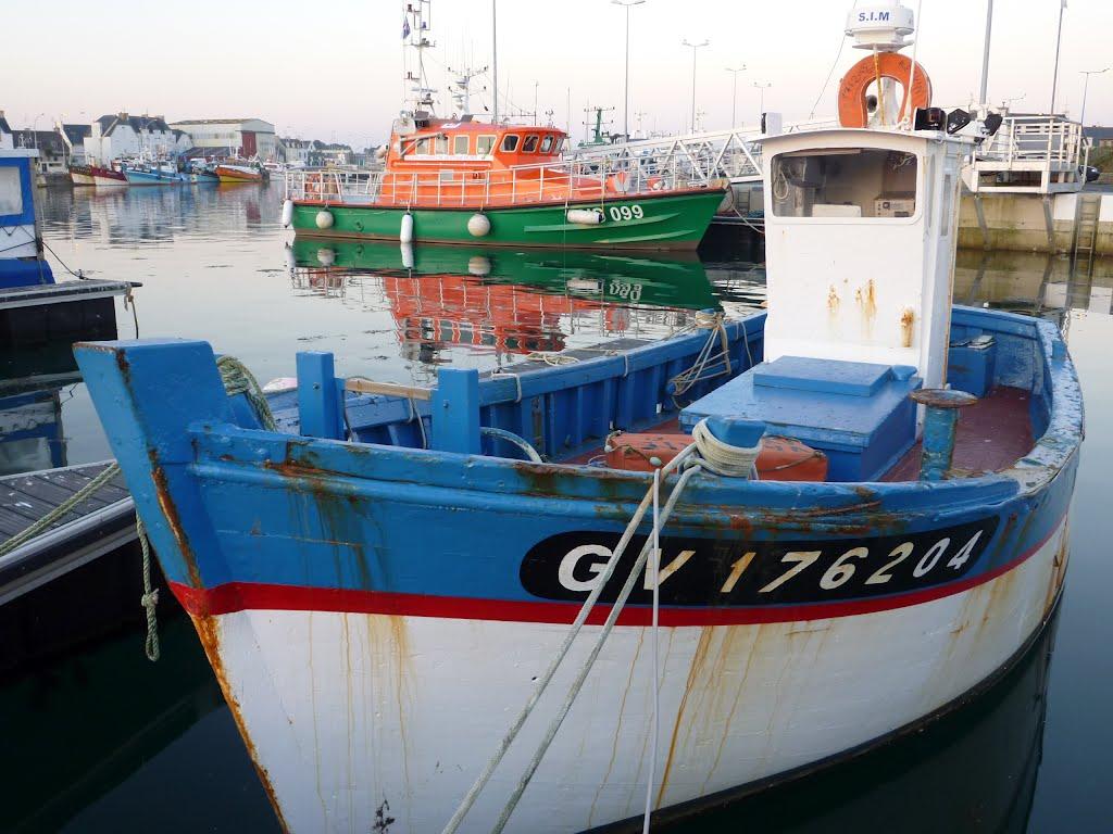 Requin gv176204